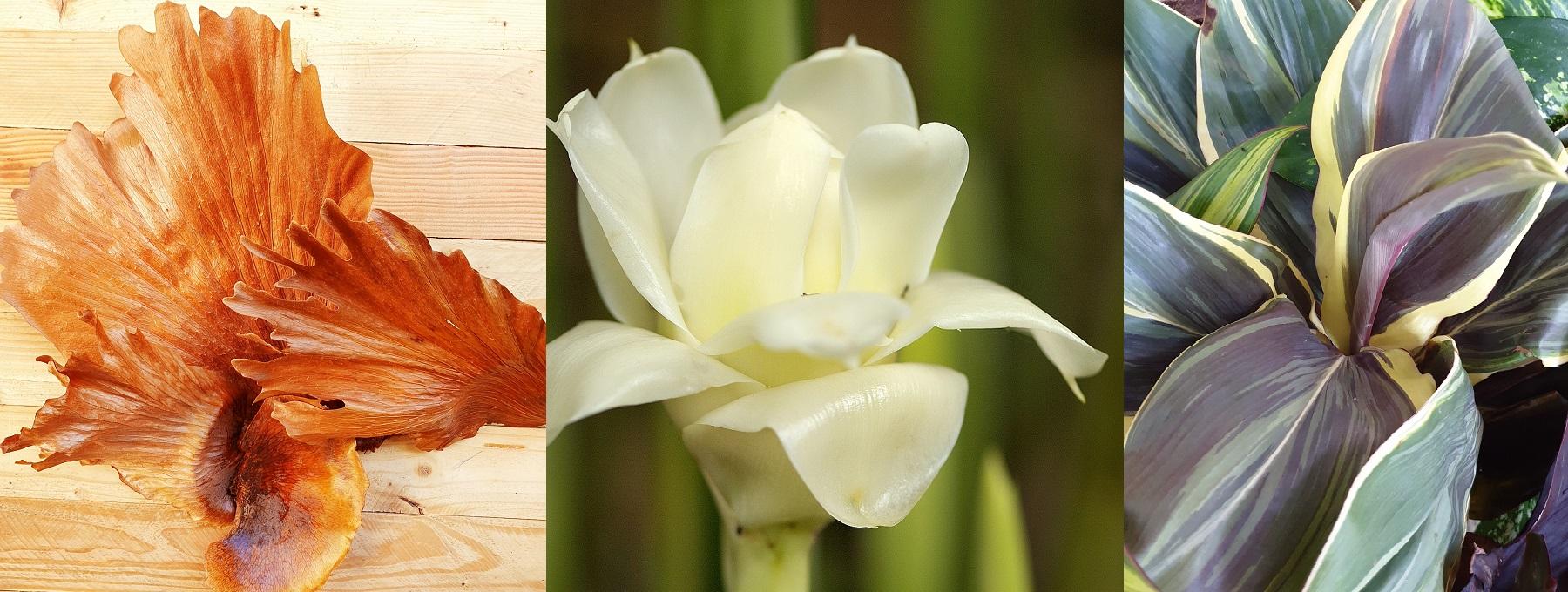 Fleurs et feuillages tropicaux pour les professionnels