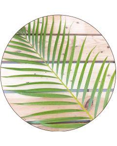 Petit Areca (Palmier Multipliant), par botte de 10