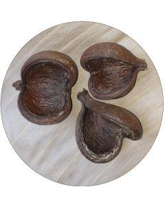 Coque Sterculia Petite (par 10,30 ou 100)