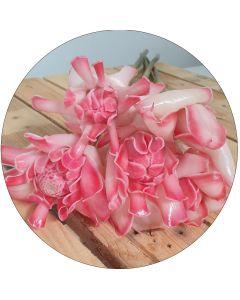 Petite rose de porcelaine nacrée (botte de 5)